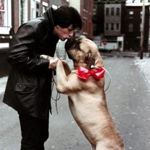Sylvester Stallone a jeho milovaný pes sylvester stallone Sylvester Stallone – jeho príbeh ti určite zvýši charizmu a príťažlivosť so psom emot  vna 300x300
