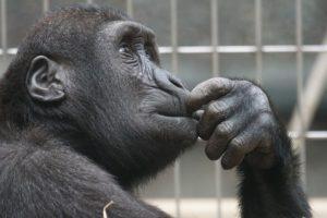 zmyslená opica  sexuálne obrazy Sexuálne obrazy: Ako byť potenciálny milenec od prvého zoznámenia primate 1019101 640