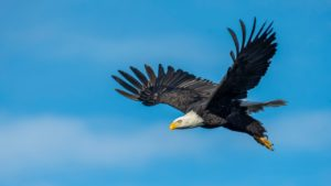 robenie chýb Bojíš sa spraviť chybu? TOTO si musíš prečítať an eagle flying in the sky 3250638 300x169
